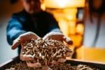 Jak często należy serwisować piece i kotły na pellet?